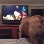 A Concerned English Bulldog Attempts to Warn a Girl In a Horror Film of Impending Danger