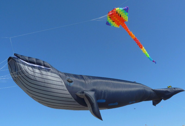 The Blue Whale Kite by Peter Lynn Kites