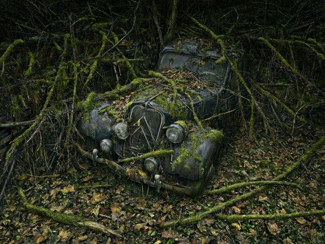 Paradise Parking by Peter Lippmann