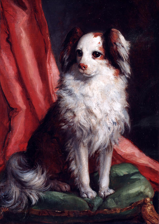 Portrait of the Spaniel by Giovanni Battista Tiepolo