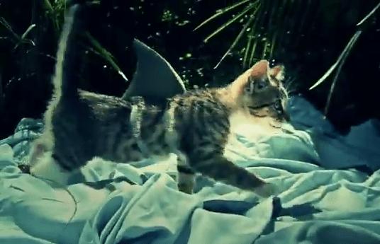 Cat as a shark