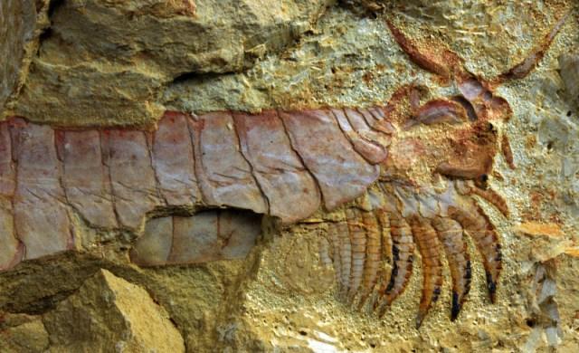 arthropod-fossil-2