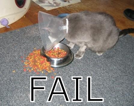 Fail Cat