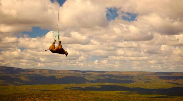 Black Rhino Range Expansion Project