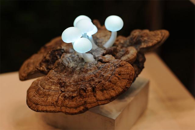 LED Mushroom Lamps by Yukio Takano