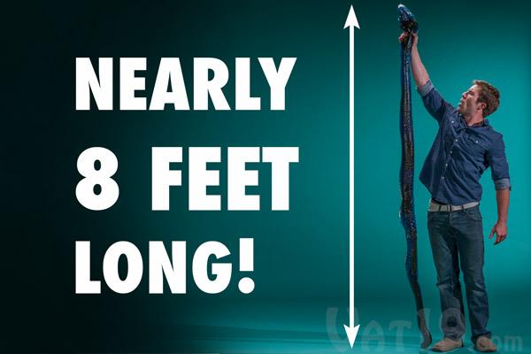 Nearly 8 feet long