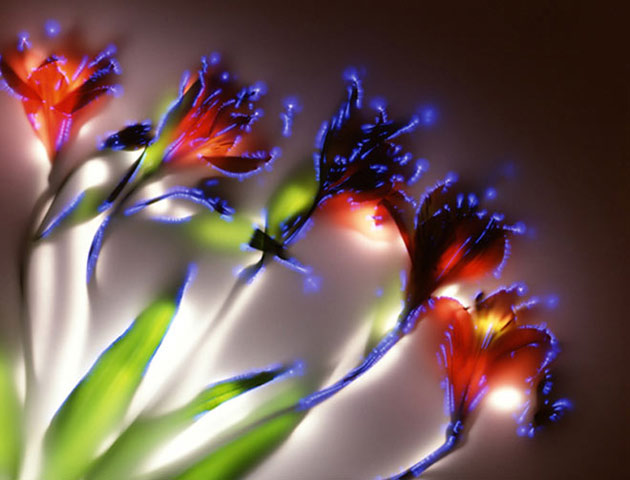 Photos of electrified plants by Robert Buelteman