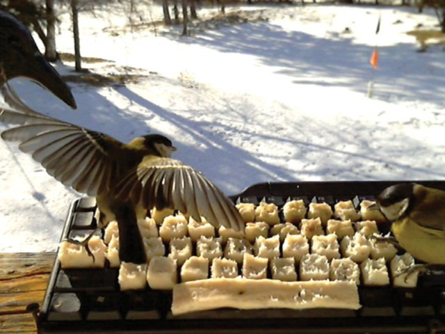 Real birds on Twitter