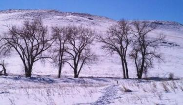 Winter trees in Denver