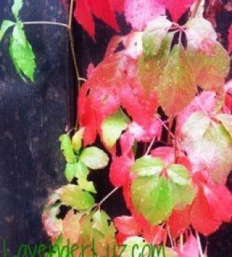 Autumn's Raiment