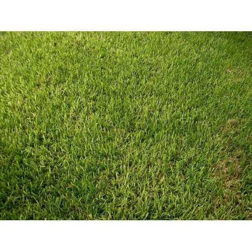 Medium Crop Of St Augustine Grass Seed
