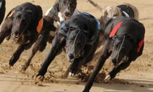 Can You Make Money Laying Greyhounds On Betfair?