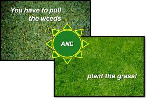 You have to pull the weeds AND plant the grass!