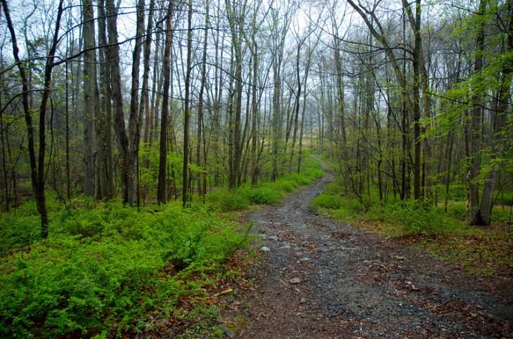 Final woods turn one week before Loop in 2010. Photo by Rob Cummings.