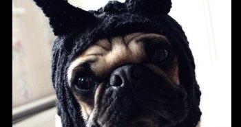 Pug-Dog-Hat1