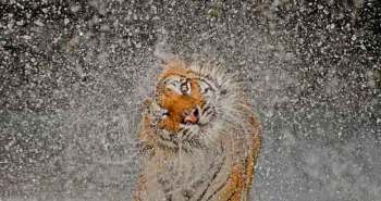 Grand_Prize_Nature_Winner_of_2012_National_Geographic_Photo_Contest_CubeMe1