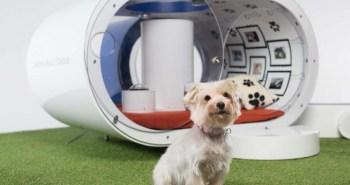 Dream Doghouse niche Samsung