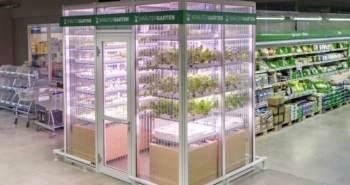 INFARM fermes verticales supermarchés Berlin