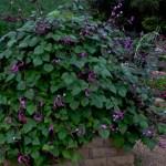 Fall-Vegetable-Garden-Texas-Lee-Ann-Torrans-4