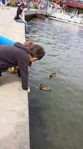 Here ducky, ducky!
