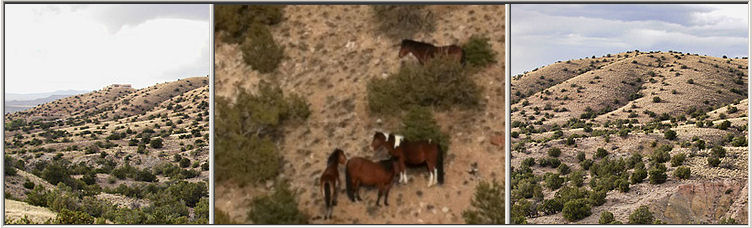 Wild Horse Mesa Placitas New Mexico