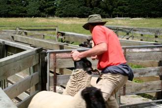 NZ_Sheep_farmer