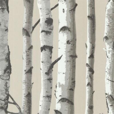 Tuxbury Birch Tree Wallpaper - Lelands Wallpaper