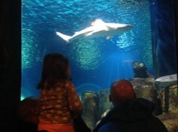 { Notre Avis } Visite a l'Aquarium SEA LIFE de Val d'Europe !