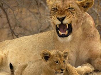 Ce jour ou je suis devenue maman Lionne