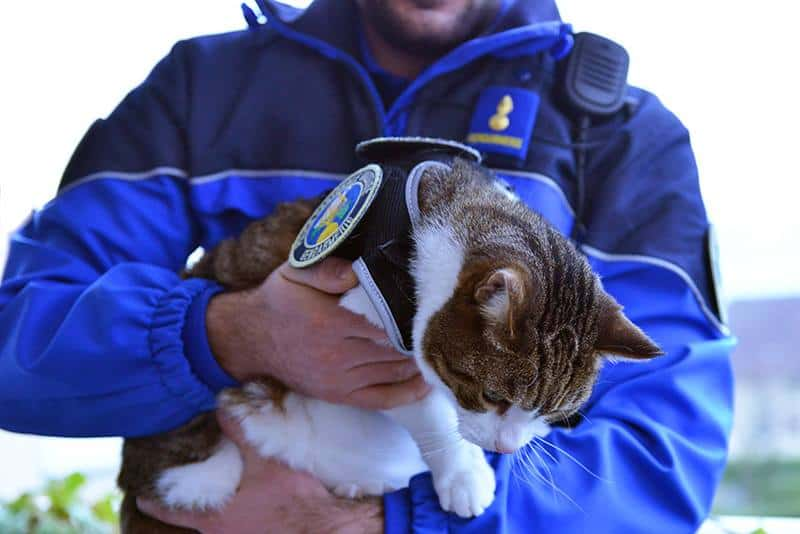 Vaud police cat_1