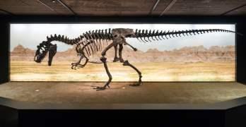World-renowned dinosaurs move into Geneva's Natural History Museum