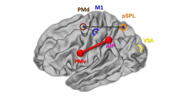 Johnen &#8211; <em>eLife</em> &#8211; Causal manipulation of functional connectivity in a specific neural pathway during behaviour and at rest