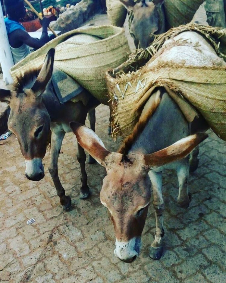 Lamu town's main form of transport