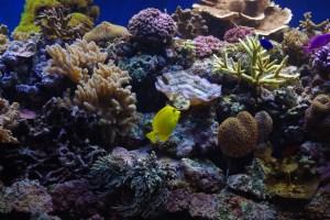 bel aquarium recifal 7333