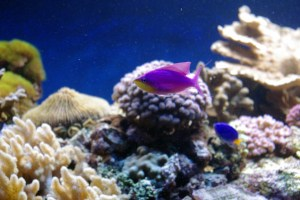 bel aquarium recifal 7339