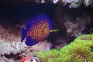 bel aquarium recifal 7345