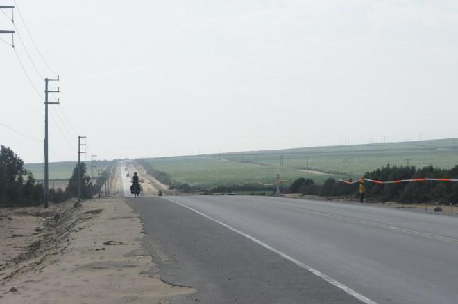 Panaméricaine au milieu des champs de canne à sucre dans le désert
