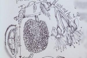 dessin-stylo-102-10fev-1l