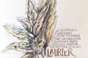 l2-Dessin-botanique-alphabeth-culinaire-renata