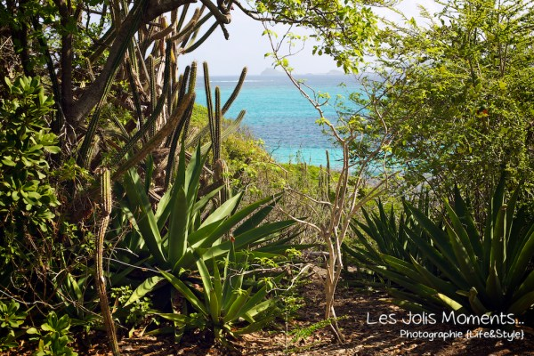 Tobago Cays 6