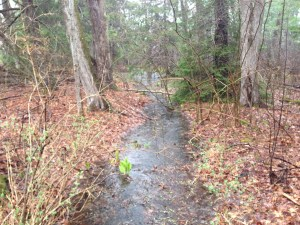 stream with skunk cabbage