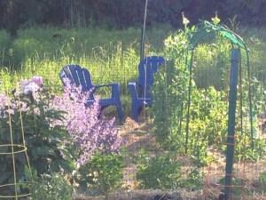 backlit-garden.jpg