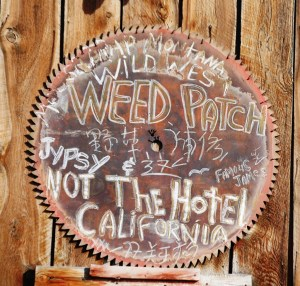 Weed Patch Sign