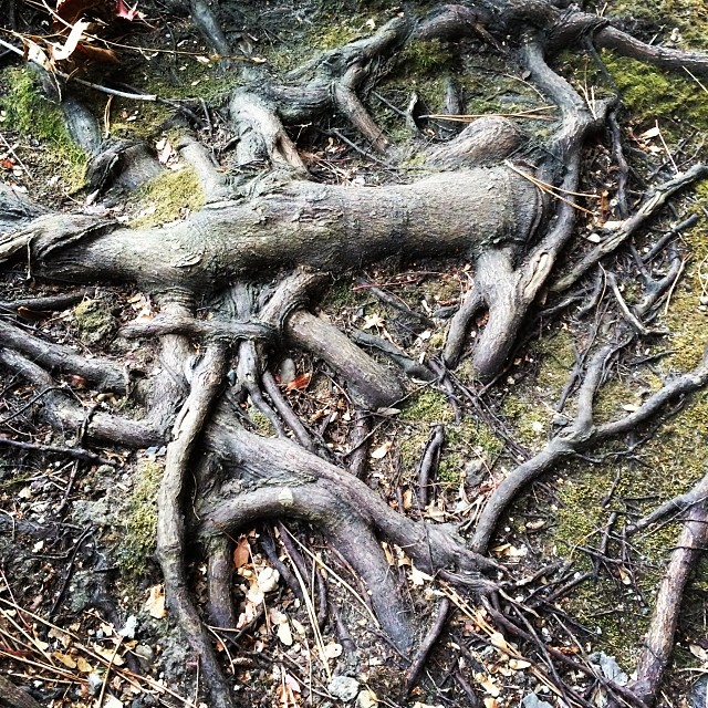 Natural Cubism #nature #tree #love #winter #ca