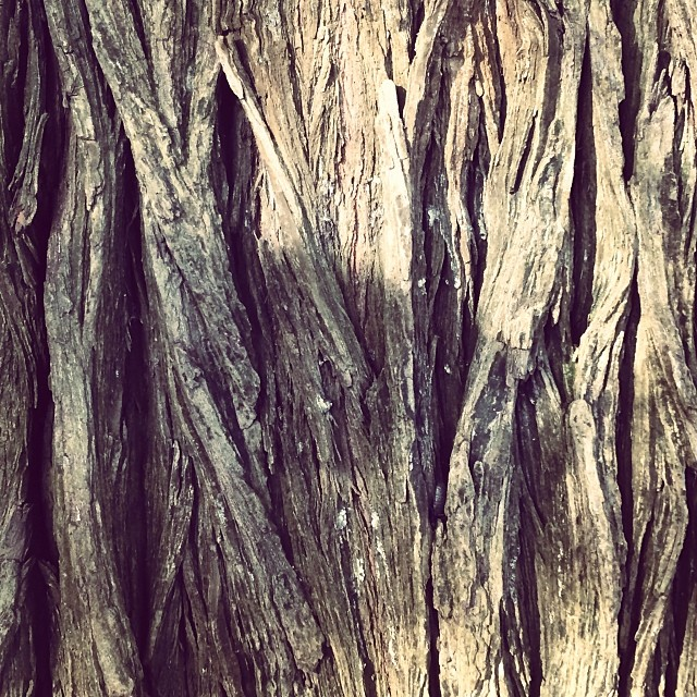 Veins of my body, redwoods.