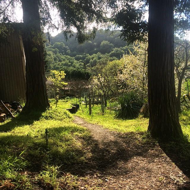 Backyard meditation #pinolehome #nofilter