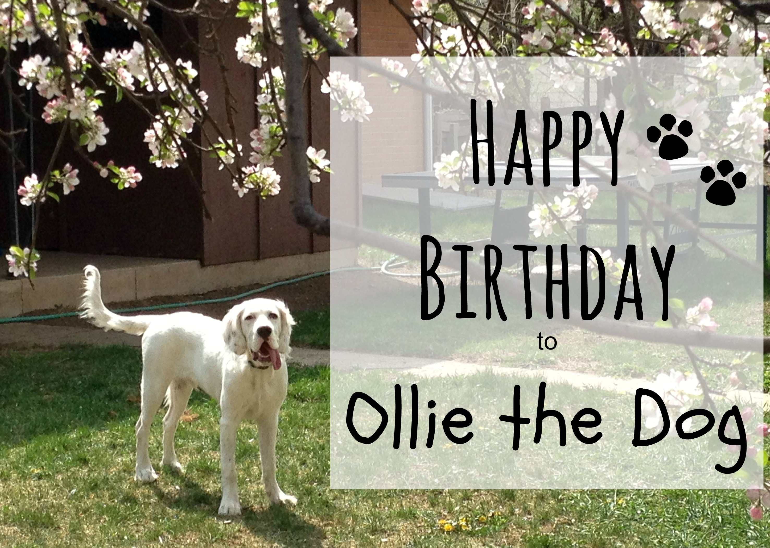 ollie birthday