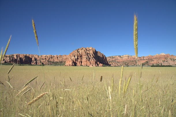 Farmers Field with Kolob Rock Backdrop