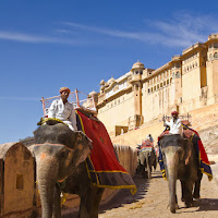 elephants return to the gate to pick more tourists - at Amber fort in Jaipur