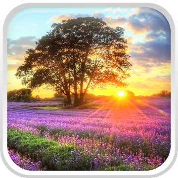 Perfect Sunset Live Wallpaper - Apps on Google Play